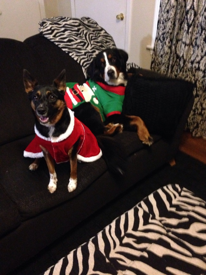 Dogs in Clothes Christmas Edition