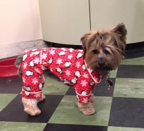 Buffy in her new jammies