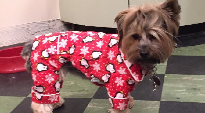 Why Are Dogs So Cute In Clothes?